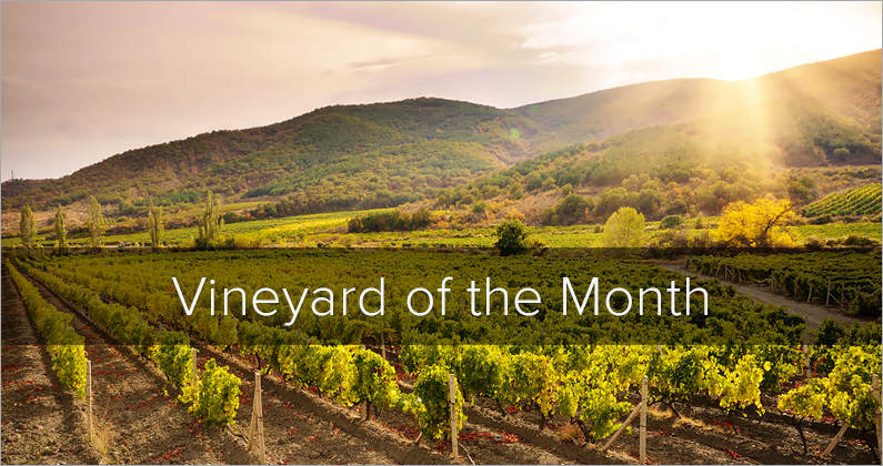 Vineyard of the Month: Groth Vineyards – Oakville, California